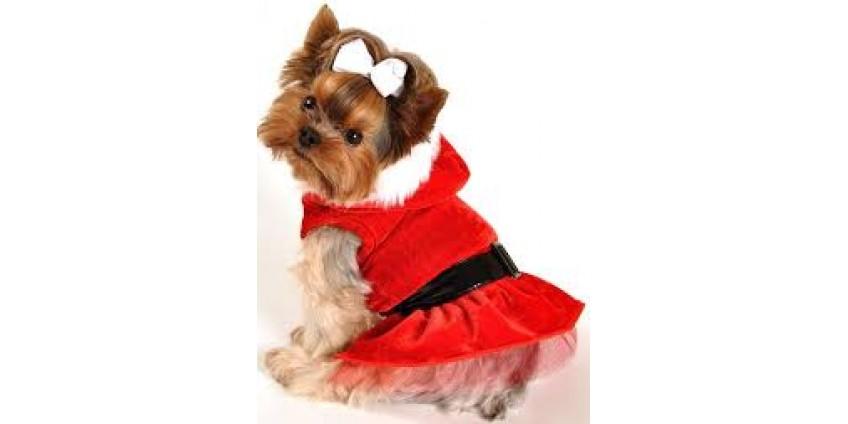 Как подобрать одежду собаке